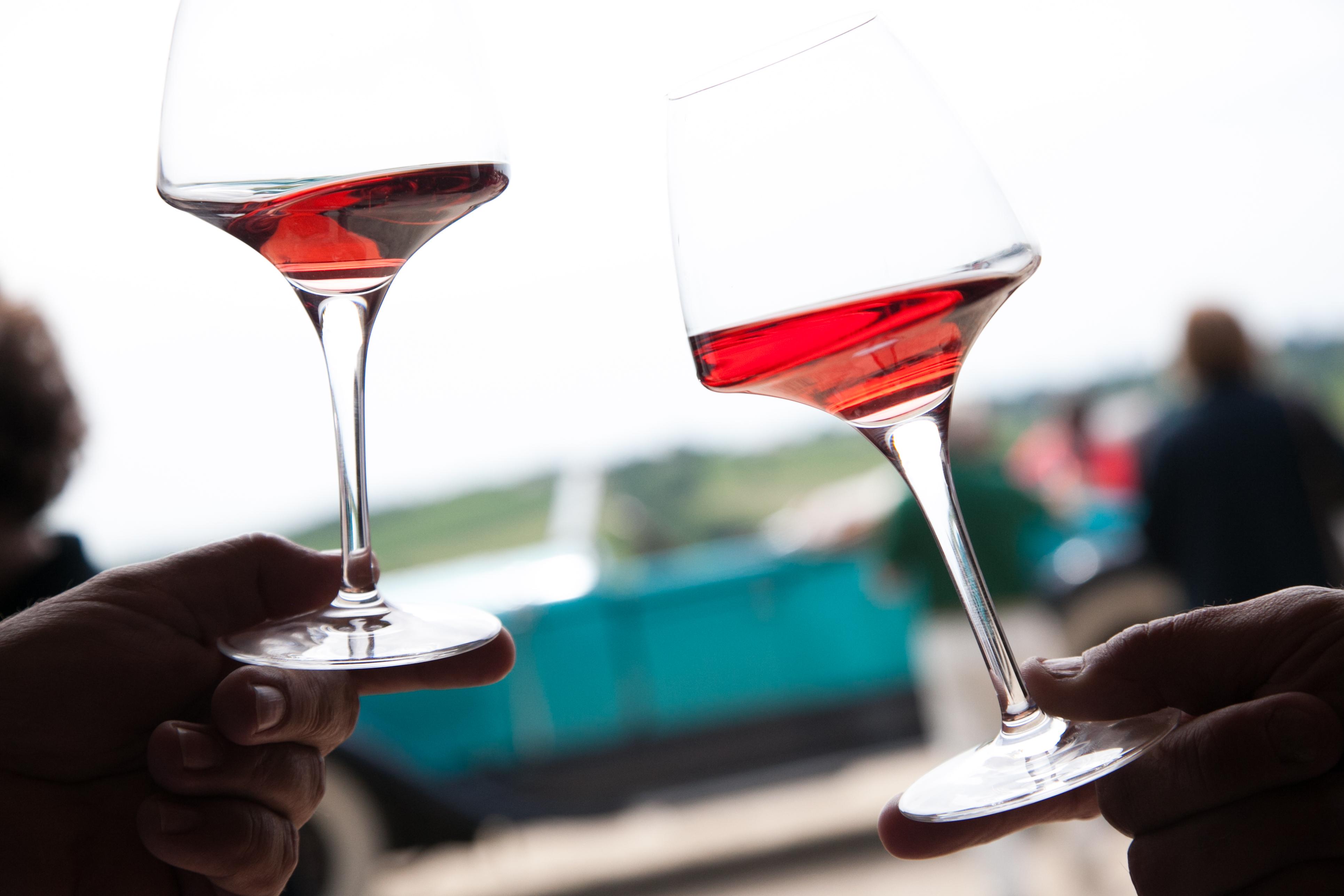 Dégustation de vins  à la propriété