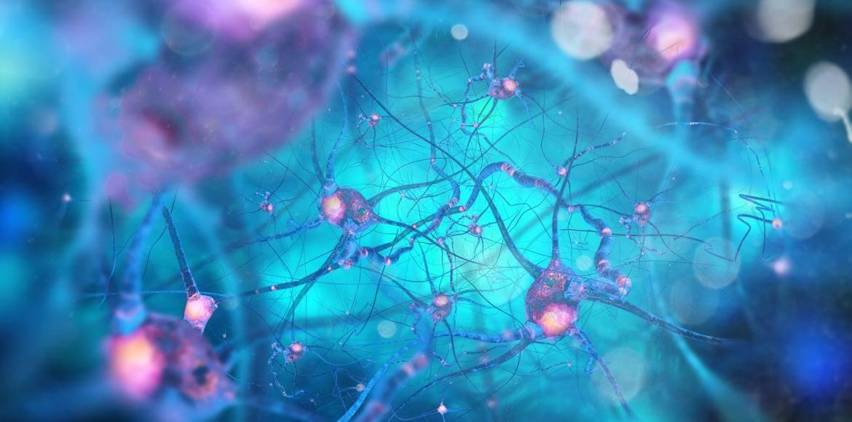 neurones-shutterstock_373286035-bd