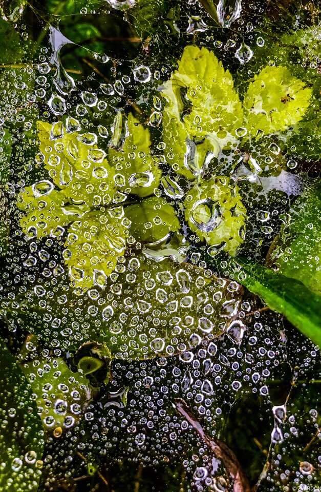 Perles de pluie Photo Frantisek Zvardon