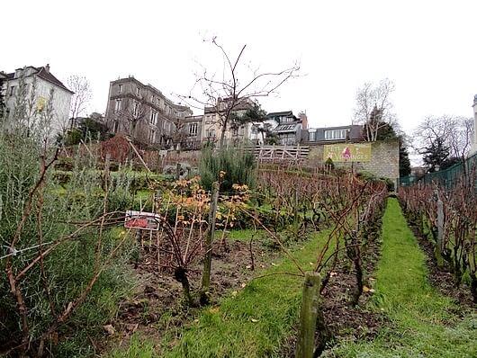 Les vignes à Paris