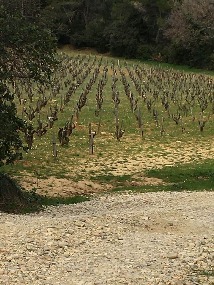 Photo vignoble Vallee du Rhone Rayas P Jourdain fevrier 2020