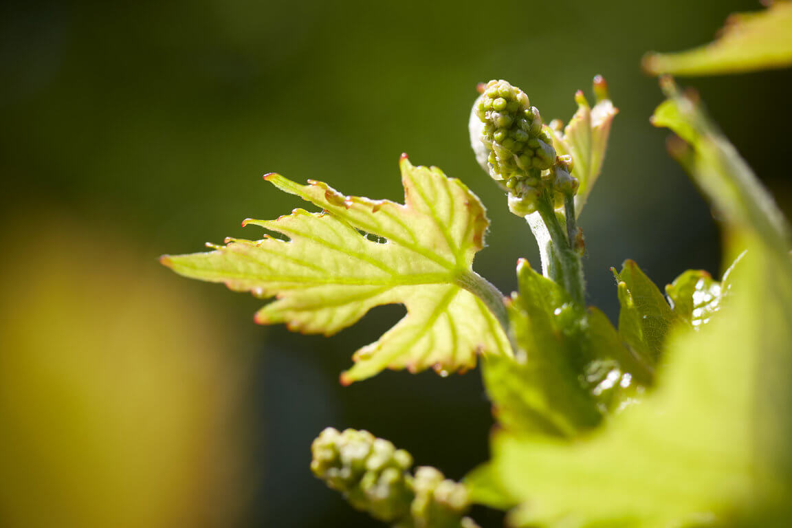 image-moyen-vignerons_st_victoire_096