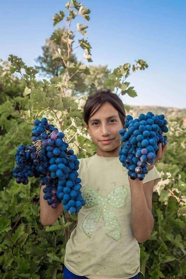 Au Nord du kurdistan berceau du monde du vin