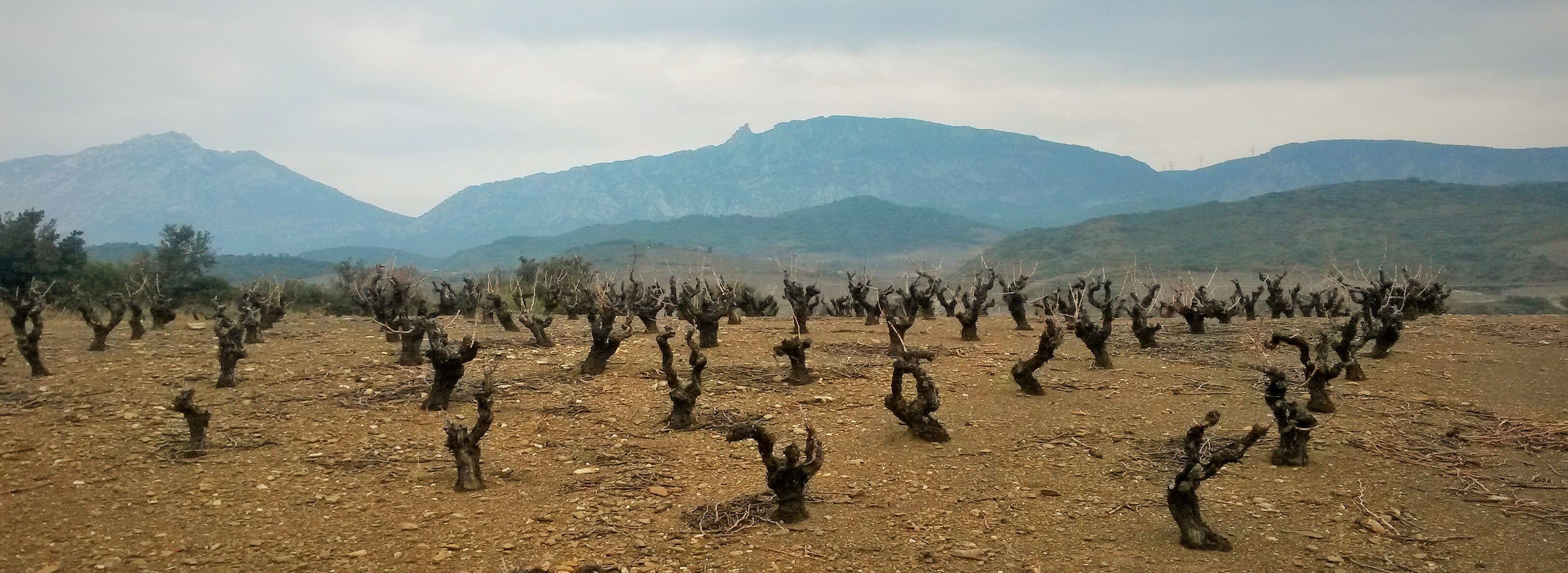 Roussillon en hiver